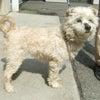 《2019年度》4月18日~19日福島県動物愛護センター&福島市収容犬情報の画像