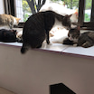 猫の日常風景