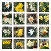 水仙45種が咲き乱れる庭での画像