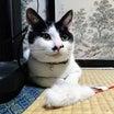 【竹千代】から、幸せを掴んだ猫【ふくまる】へ