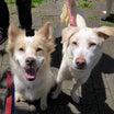 冬を乗り越え春が来た ~千葉東葛飾地区の多頭飼育現場の犬たち