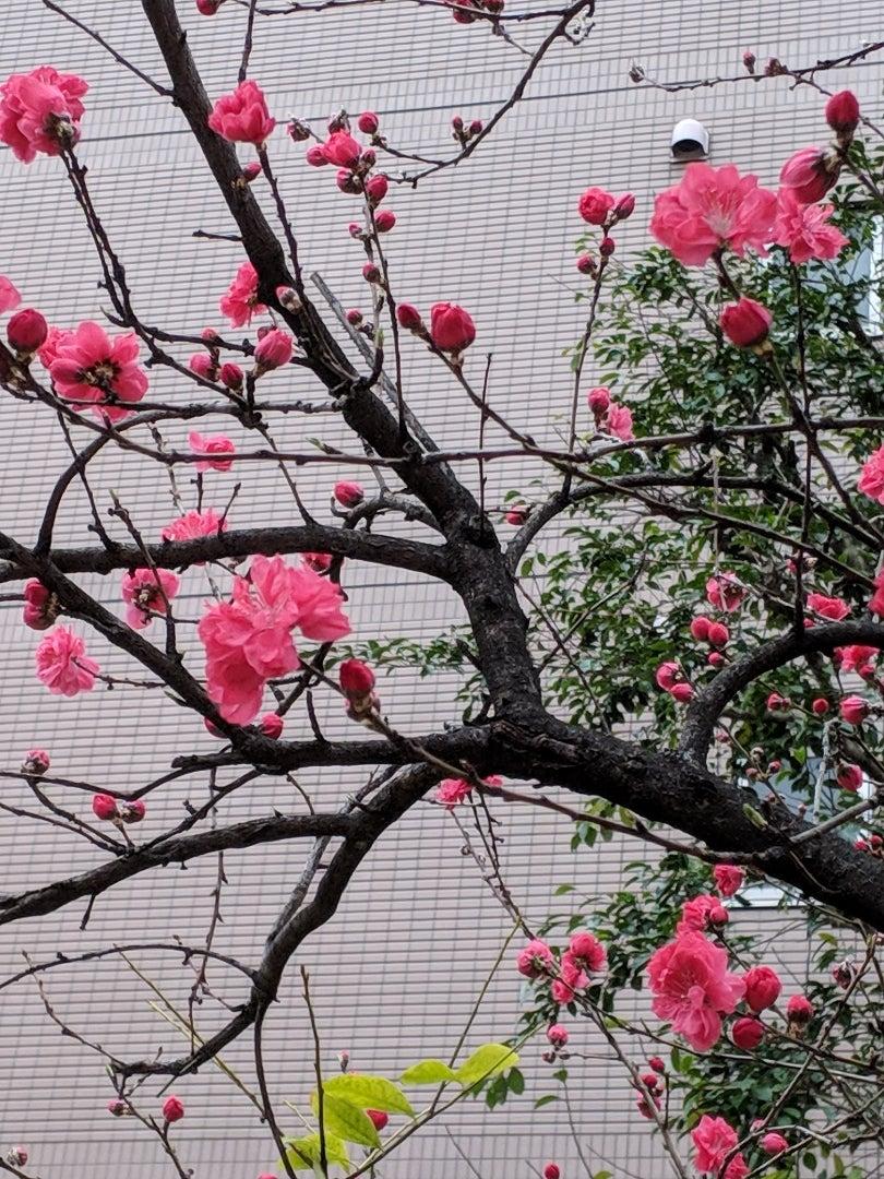 逆境の中で咲く花は どの花よりも貴重で美しいの記事より