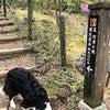 伊豆下田 ムーン・リバージュ. GW前の看板犬達のリフレッシュの画像