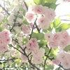 5.11横浜SPARKJOY!!!この指とまれ♪出店者ご紹介⑫GoldenAppl黄金の林檎さんの画像