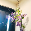 お花もお客様を癒しますの画像