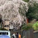 春の京都 ムジカムジナの記事より