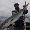 4月29日(月)   小難しい魚!の画像