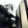 #563.雨やん☔️☔️☔️☔️の画像