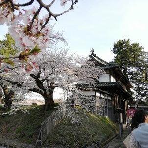 憧れの桜の画像