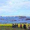 【茨城県】ネモフィラを見ながらネモフィラブルーソフトを食べるよ♩国営ひたち海浜公園の画像