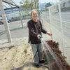 思い叶え隊「花壇や植木のお世話をしたい!!」の画像