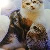 ネコの言葉(鳴き声)の画像