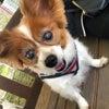 犬日。浅倉樹々の画像