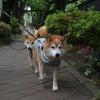 ゴールデンウィークは、ロング散歩です!の画像