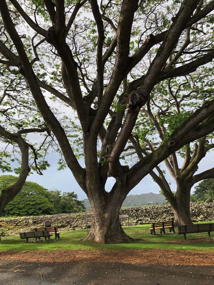 ゴールデンウィークにハワイに来れてる日本人の方々はすごいなっての記事より