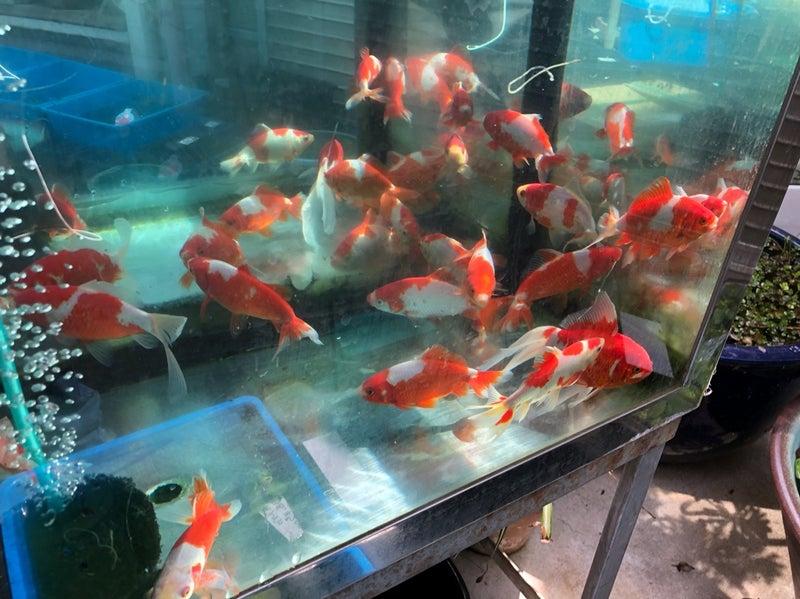 場 佐々木 養魚