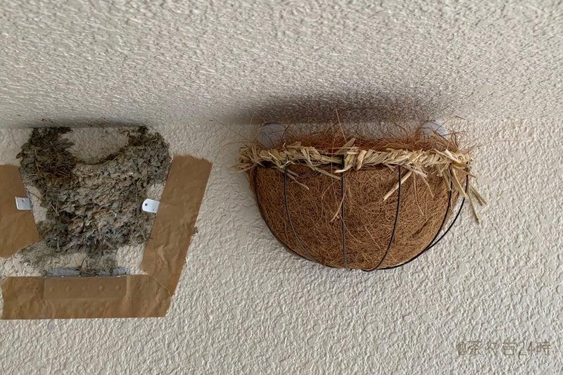 補強 巣 ツバメ の