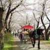みちのく「三大桜を観る」の画像