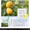 立川IKEAと立川レモンプロジェクト!の画像