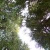【シダーウッドバージニア】心に爽やかな風を流し込む。の画像