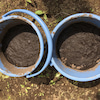 お庭でお米作りプロジェクト♪種まきPart1〜その後の画像