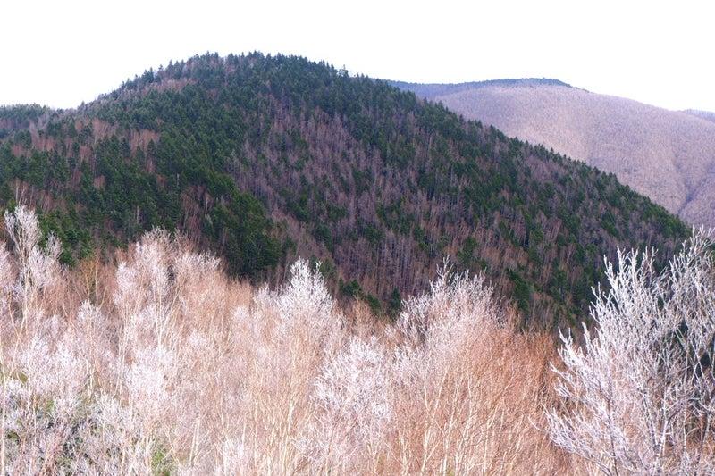 遥かなる和名倉山⑥【和名倉山山頂へ】 | HIROのブログ