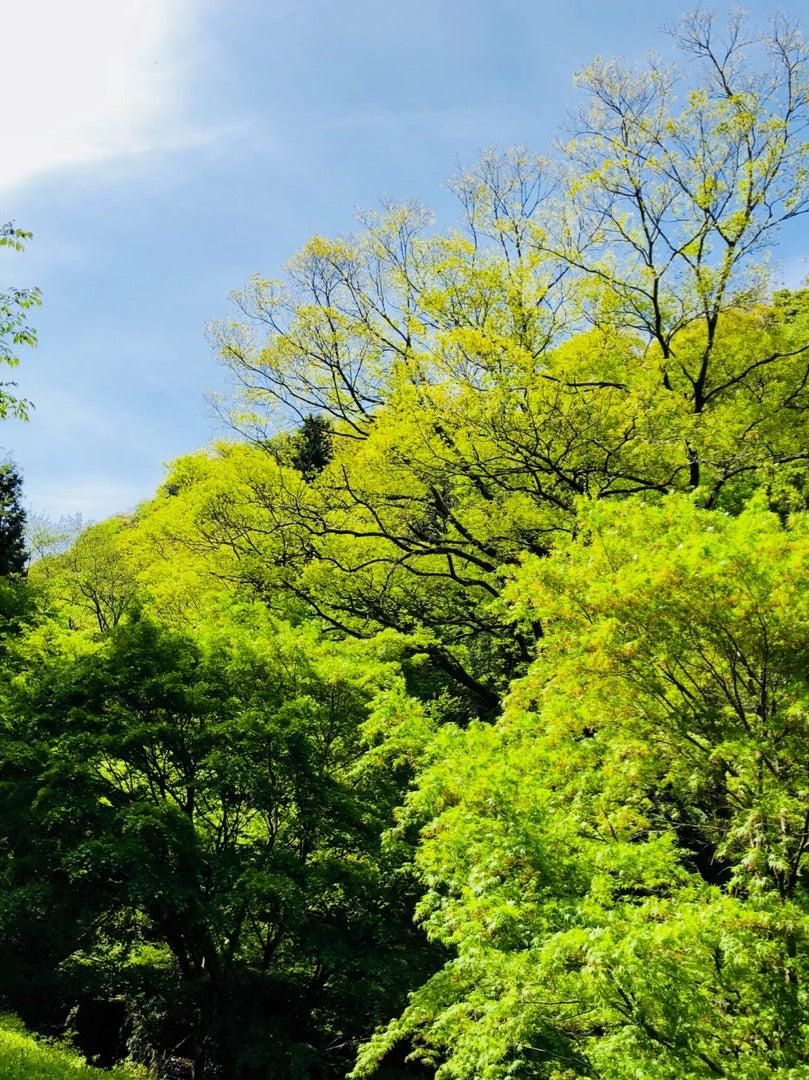 新緑のころ