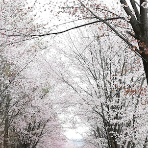 岩木山~芦野公園の画像
