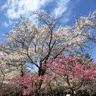 札幌婚活 プロフィール欄のNGワードや書き方について 札幌結婚相談所ブルースターウエディングの記事より