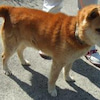 《2019年度》5月7日福島県動物愛護センター本支所&福島市収容犬の画像