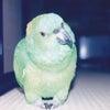 小鳥を飼う前にの画像