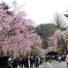 みちのく「三大桜を観る」其の二の画像
