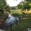 令和元年もカラフルな日々@草加公園の画像