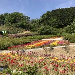 画像 *花郷OKADA*開花状況 の記事より 5つ目