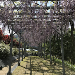 画像 *花郷OKADA*開花状況 の記事より 16つ目