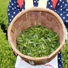 茶娘♥お茶摘み体験&キッチン蒸留香りの取り出し・活用セミナー&各茶種の香気鑑定・飲み比べセミナの記事より