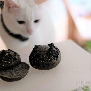 白猫に黒パンの画像