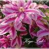 母の日のプレゼント◆KiyoのDiaryの画像