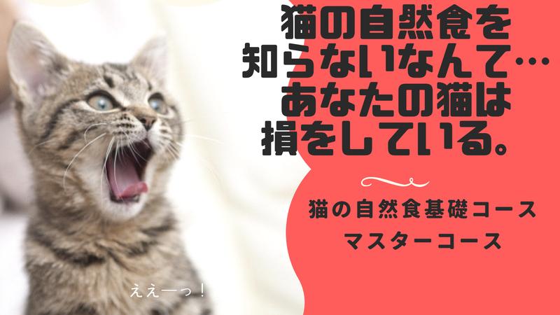 猫の自然食講座