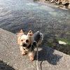 伊豆下田 ムーン・リバージュ. 海と山 いろいろなお花が一杯の画像