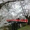 みちのく「三大桜を観る」其の三の画像