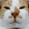 猫さんと一緒に快適に暮らしたいvol.1の画像
