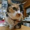 猫さんと一緒に快適に暮らしたいvol.5の画像