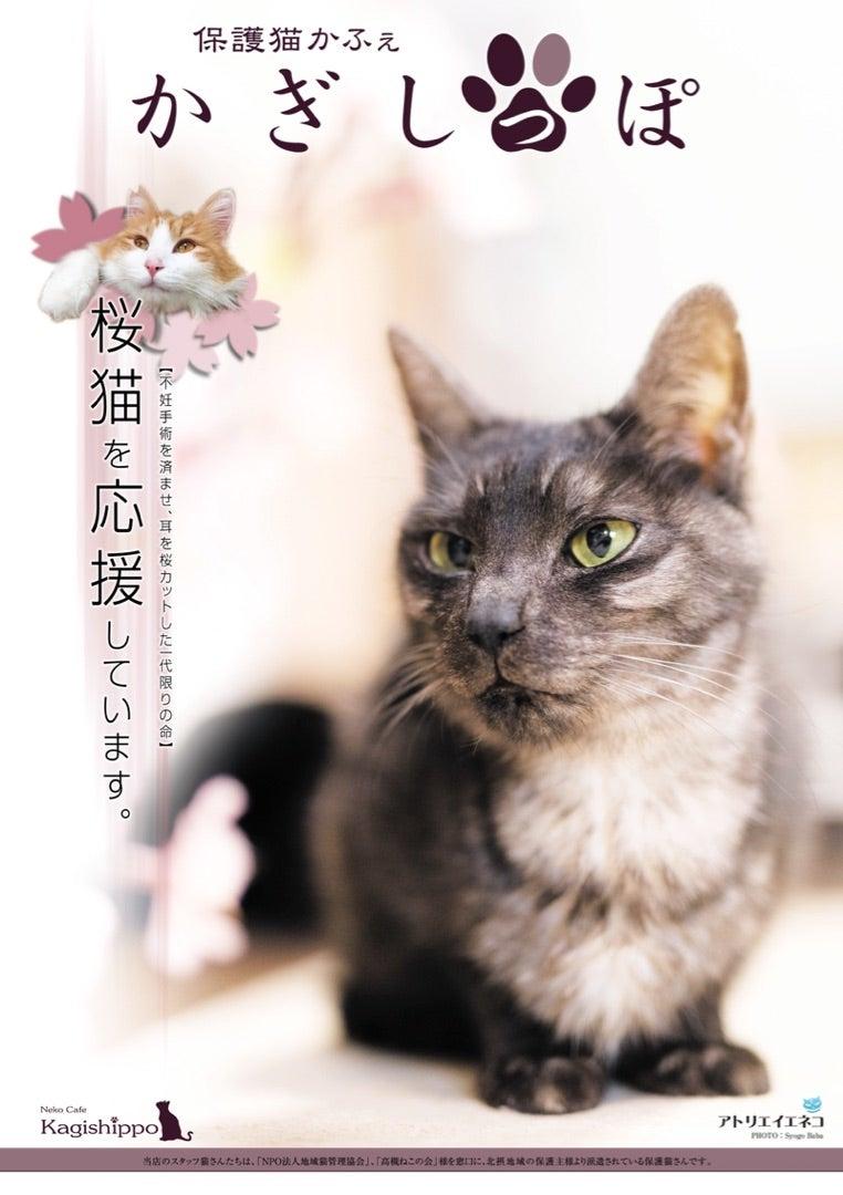 カット 野良猫 耳 知ってください「さくらねこ」。地域猫問題に取り組む猫愛好家たちの活躍|ねこが好きな家