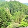 藤、森で咲く光景の画像