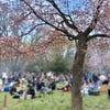 円山花見&にじいろのさかな原画展の画像