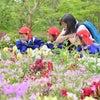遠足「花の文化園」(年中・年少・最年少組)の画像