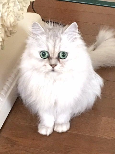可愛いプレゼント 母の日 温泉タオルン 初夏キャンペーン 乳がん 温泉湯着 猫 プリンセスのんのの記事より