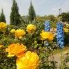 花も笑顔も満開でした!~5.11 SPARK JOY!!の画像