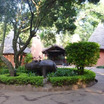 2012.7  (14)Africa ケニア サファリツアー  カバ~Hippopotamus~